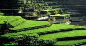 cropped-alam-indonesia.jpg