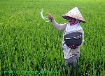Sekilas Definisi Konsep Petani Dan Pertanian Organic Hcs