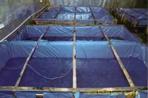contoh kolam terpal ikan lele