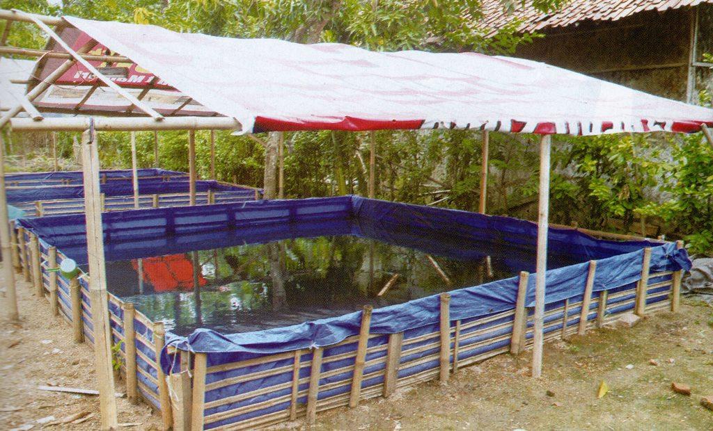 Hasil gambar untuk lele kolam terpal