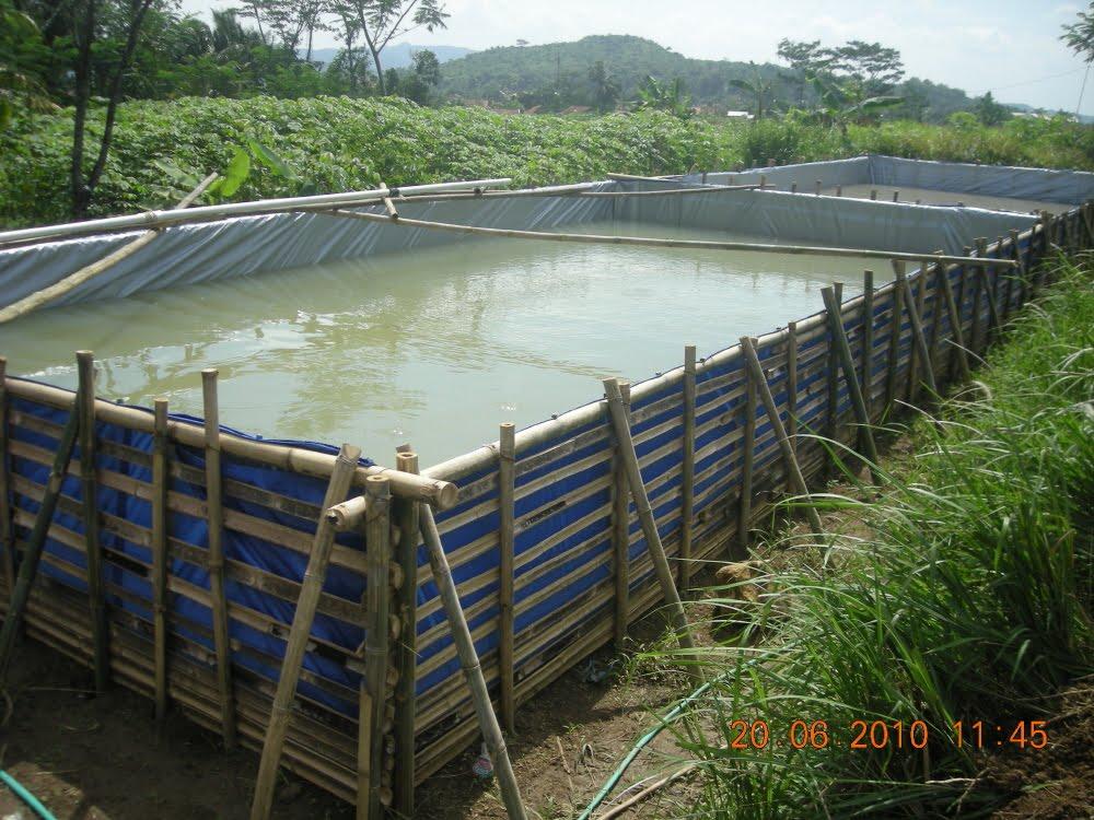Hasil gambar untuk GAMBAR kolam ternak lele