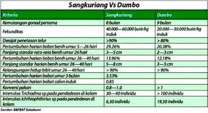 perbedaan lele sangkuriang dan dumbo